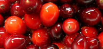 cranberries juicy