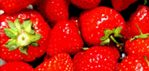 strawberries high color graffic